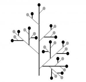 Figure 7 : représentation schématique d'une panicule où le nombre de ramifications diminue régulièrement. L'axe principal porte 5 ramifications, la ramification secondaire la plus base en porte4, la seconde ramification secondaire en porte 3, etc