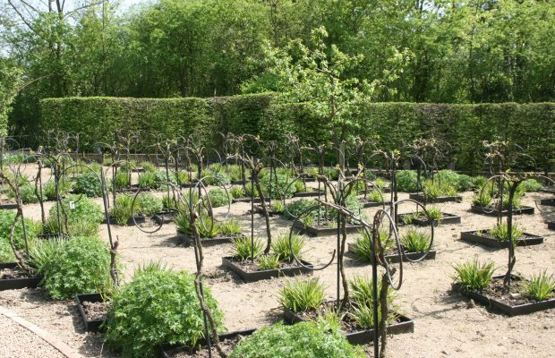 Gilles Briens a fait appel à un ferronnier d'art pour élaborer le palissage des végétaux, comme ici pour la vigne © J.-F. Coffin
