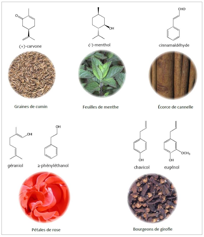 FIG. 1 : Exemples de cov caractéristiques de l'odeur de quelques espèces aromatiques.