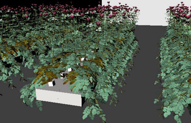 La MSM permet, ici, un aperçu d'une canopée simulée de roses fleurs-coupées cultivées sous serre (Buck-Sorlin, non publiée) - © D.R.