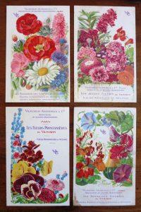 Les fleurs occupent une part importante des catalogues Vilmorin - © D.R.