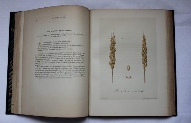 Extrait de l'ouvrage « Les meilleurs blés » - © D.R.