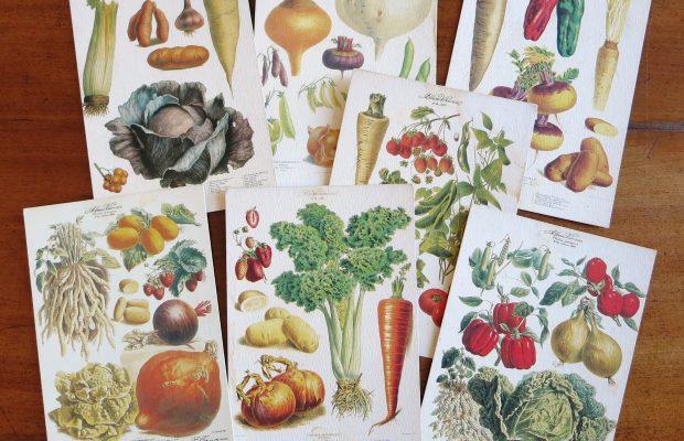 Ces planches de plantes potagères illustrent la variété des espèces proposées par Vilmorin-Andrieux - © D.R.