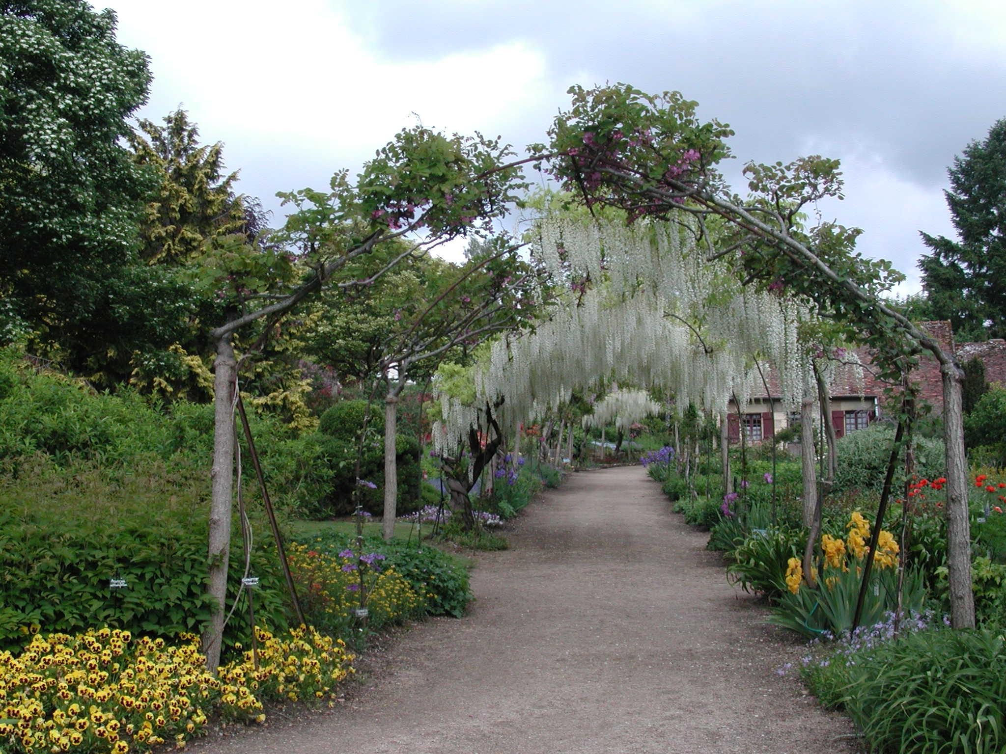 Tonnelle de Glycine au parc d'Apremont-sur-Allier - © D. Lejeune