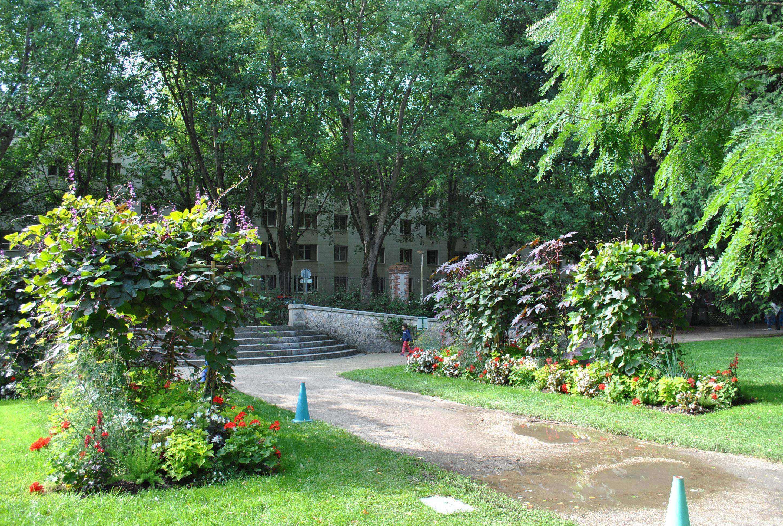 Les plantes grimpantes dans l espace public urbain l - Les produits menagers utilises dans le jardin ...