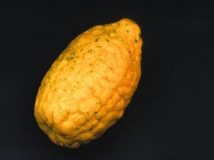 Le citronnier serait un hybride de bigaradier et de cédratier (en photo, un cédrat) - © N. Dorion