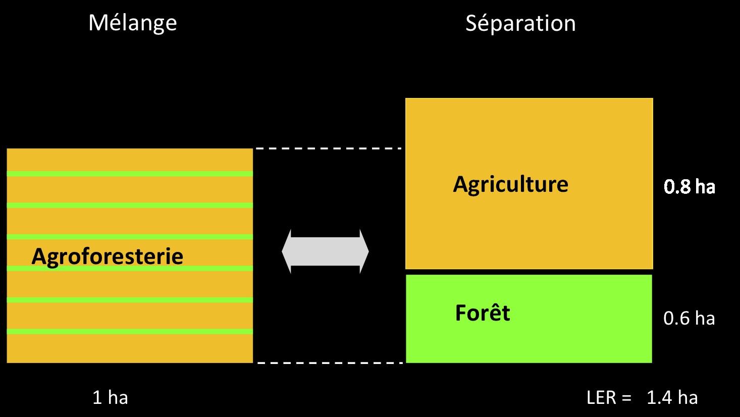 Figure 2. Efficacité des interactions entre strates : le LER - à gauche : parcelle de 1 ha combinant culture et arbres ; si ces productions étaient séparées (à droite), il faudrait 1,4 ha de terrain pour obtenir la même biomasse (grains et bois) - Source : Dupraz, 2015