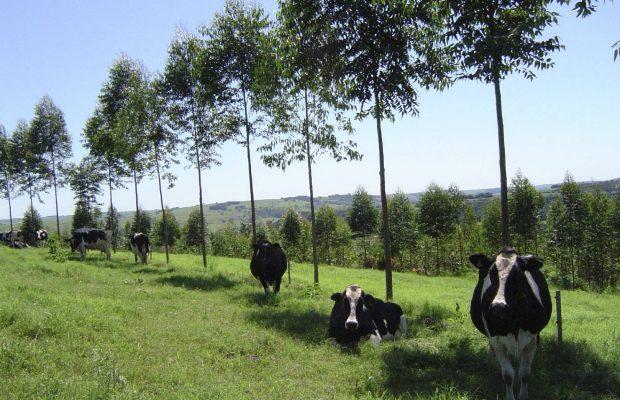 Un exemple de système agroforestier : le couvert arboré qui crée un microclimat - © C. Dupraz