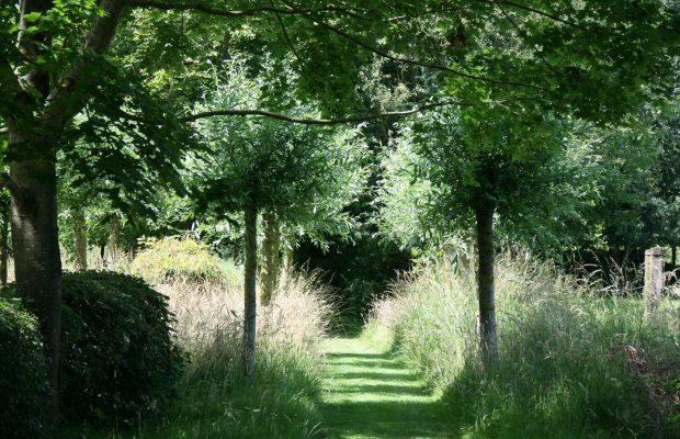 Une invitation à la promenade dans un jardin fait d'ombre et de lumière à la ferme du Lansau - © Nicole Boschung
