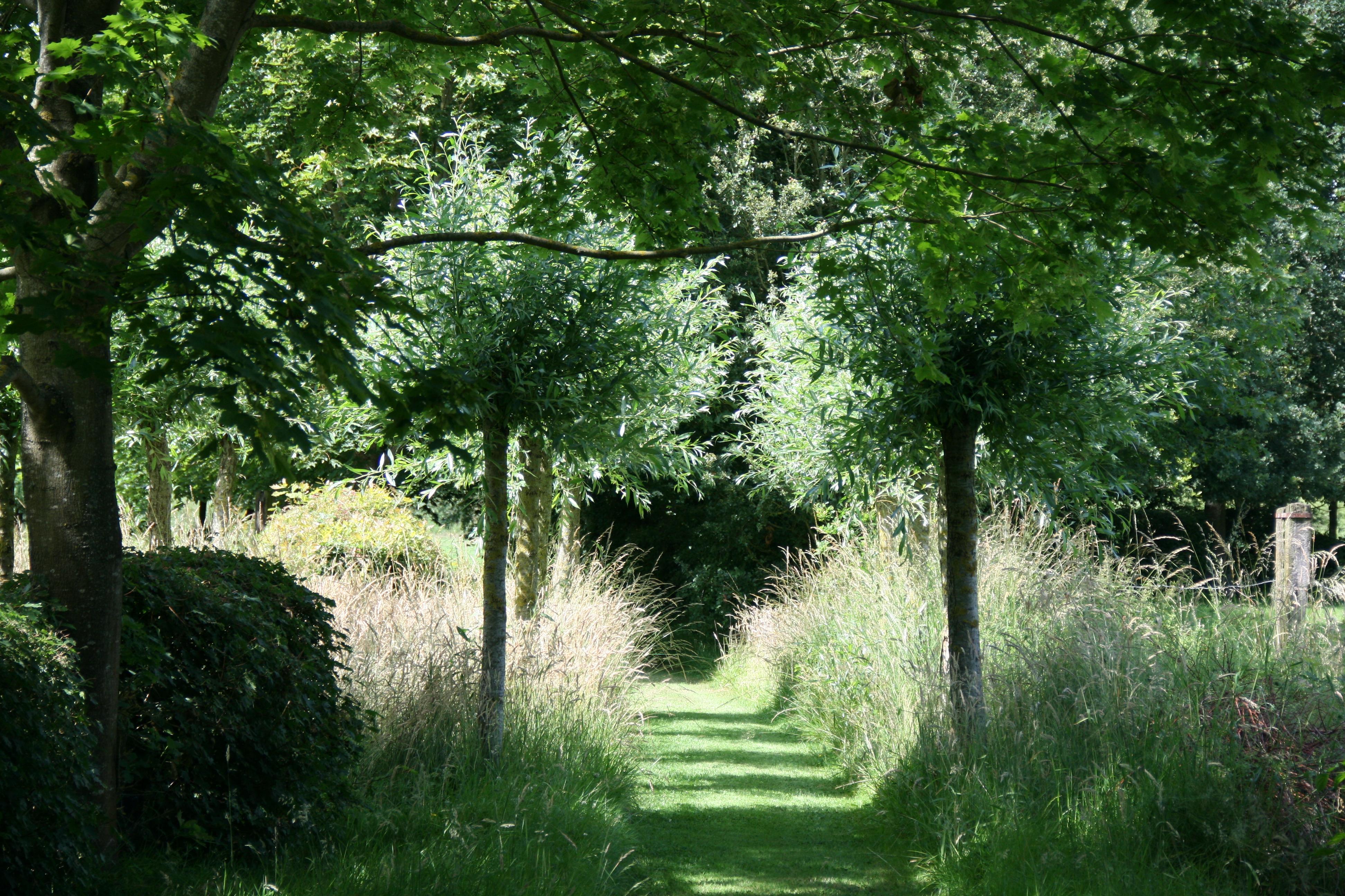 Emejing jardin ombre et lumiere ideas for Jardin ombre