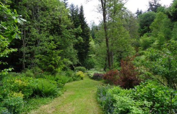 Un fond de vallon bien planté où la nature forestière est respectée - © Frédéric Pernel