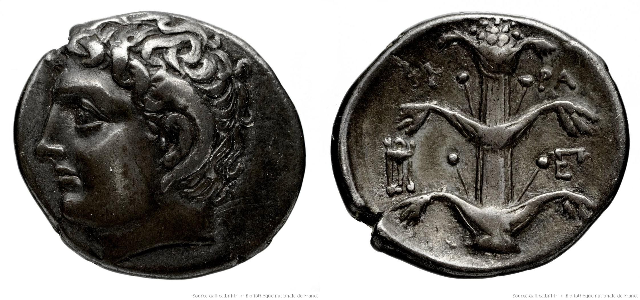 Didrachme, monnaie Cyrénaïque, où figure au verso une plante entière de Silphium (Bibliothèque nationale de France, département Monnaies, médailles et antiques, Luynes 3666)