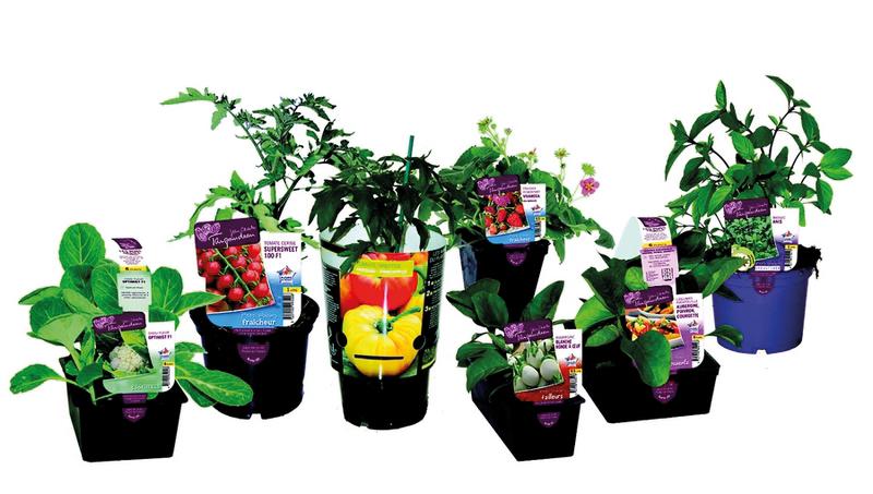 Une gamme adapté à la variété de clientèle - © Taugourdeau Plantes et Plants