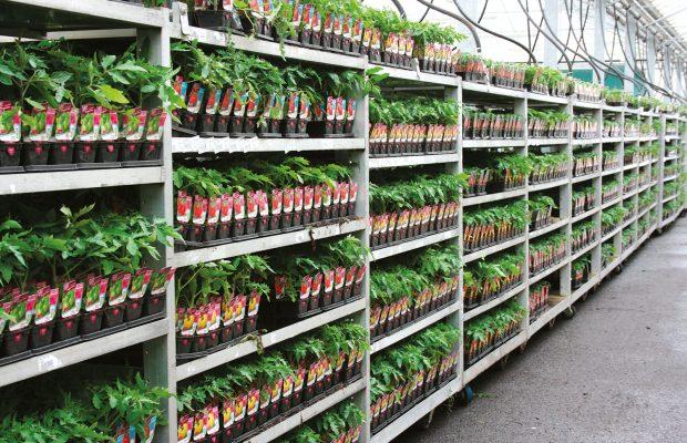 Les chromos suivent les plants dès le début de la culture, ici sur les rolls prêts à être expédiés - © Taugourdeau Plantes et Plants