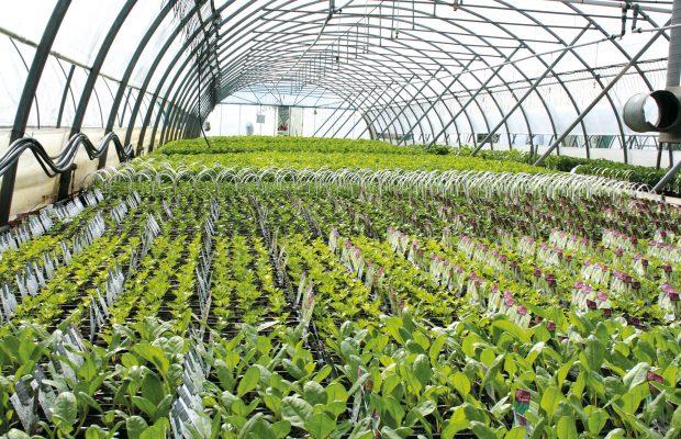 Chaque espèce est cultivée dans des tunnels séparés, permettant une meilleure maîtrise de la culture - © Taugourdeau Plantes et Plants