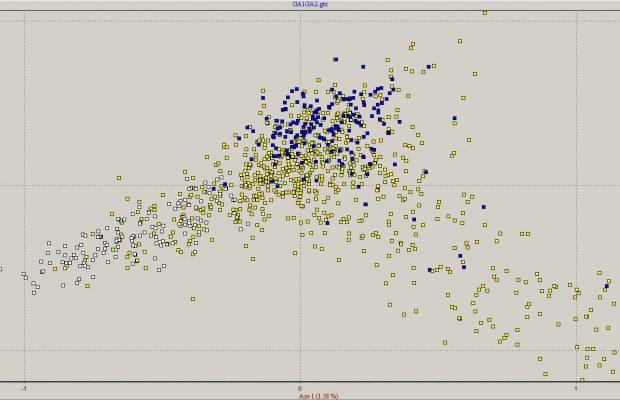 Figure 1 : Représentation de la diversité génétique des variétés de pomme analysées par marqueurs moléculaires dans le cadre du projet CorePom. En jaune : variétés à couteau anciennes ; en bleu : variétés à cidre anciennes ; en blanc : variétés récentes (essentiellement à couteau).