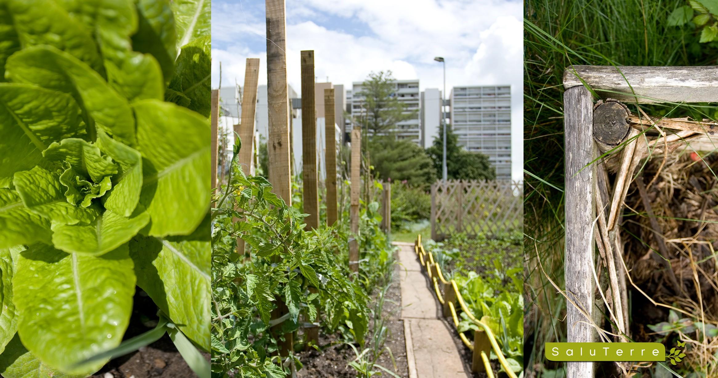 Un potager urbain : pour mieux se nourrir et échanger - © D.R.