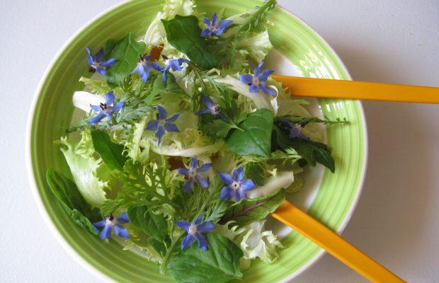 Une salade agrémentée de fleurs de bourrache - © J.M. Muller