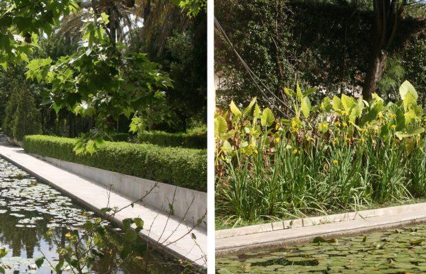 Dès l'entrée du jardin botanique, la collection de plantes aquatiques - © J.-F. Coffin