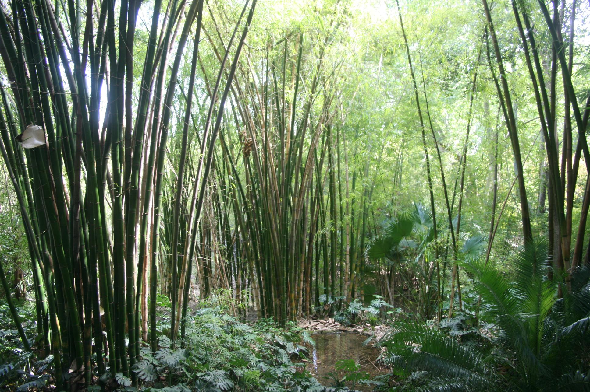 Une collection de bambous remarquable - © J.-F. Coffin