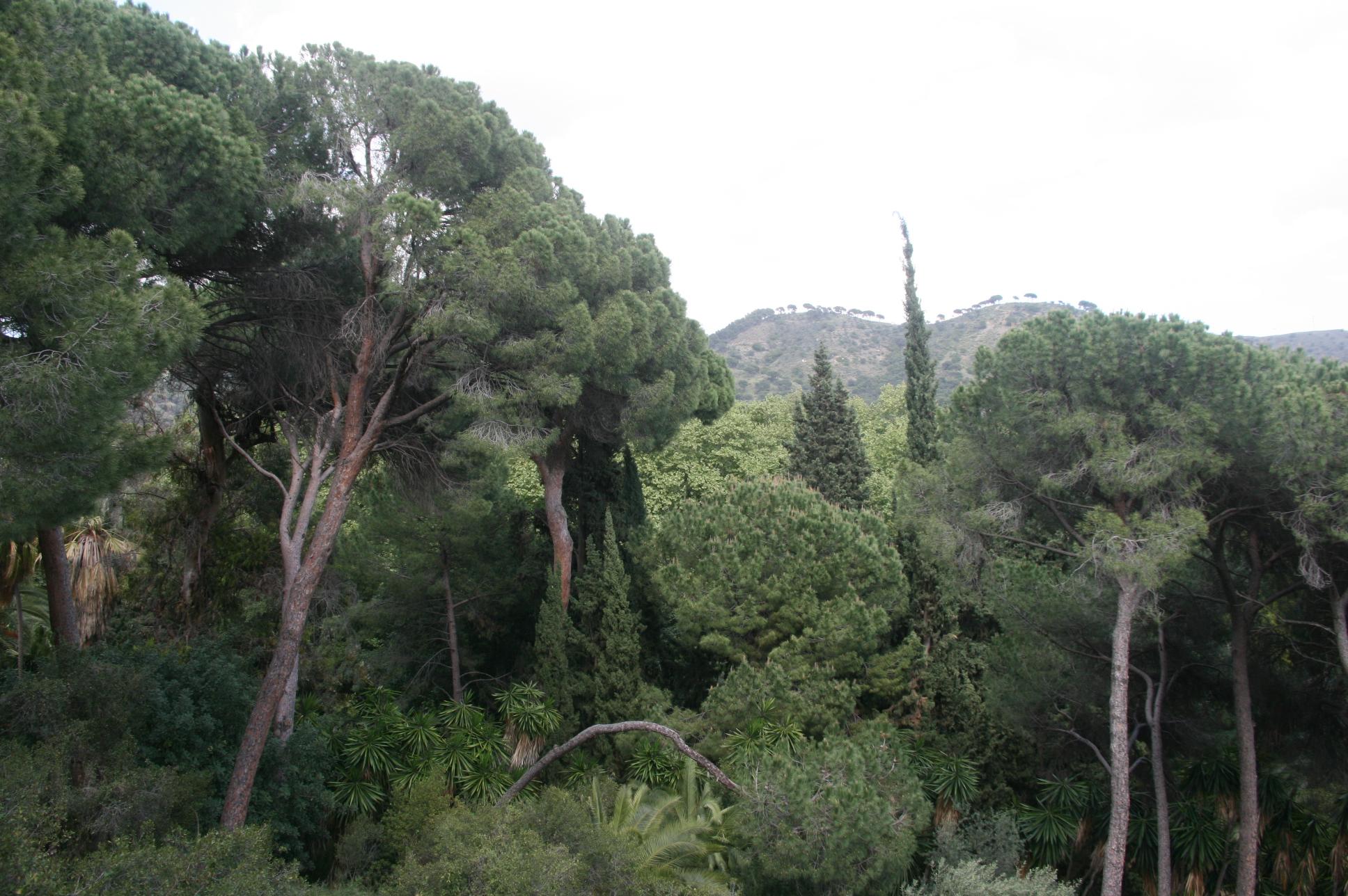 La forêt méditerranéenne avec vue sur le parc naturel des montagnes de Malaga - © J.-F. Coffin