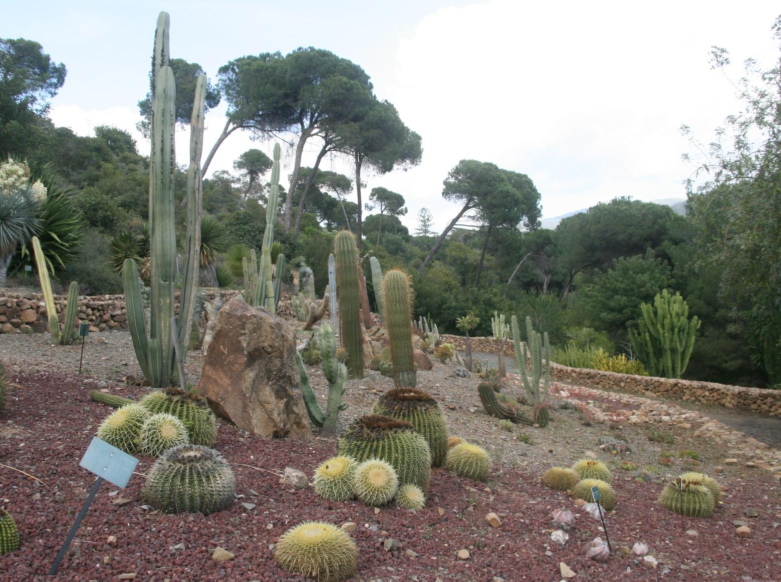 Le jardin des cactus et succulentes venant d'être entièrement rénové - © J.-F. Coffin