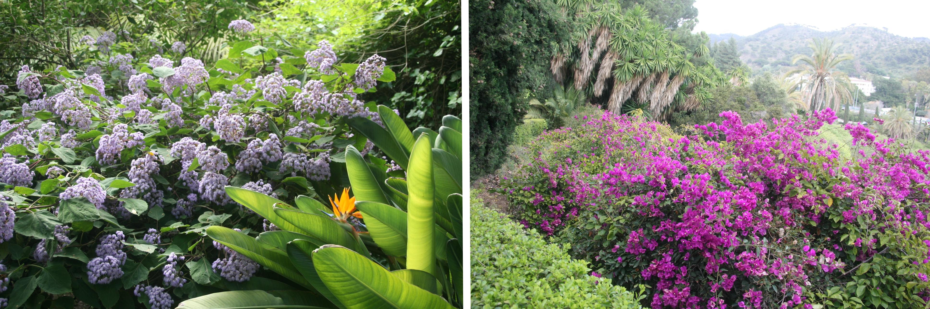 Une variété de plantes méditerranéennes - © J.-F. Coffin