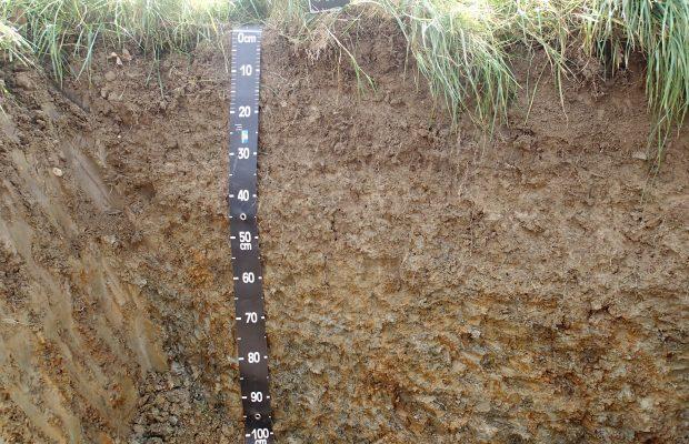 Les sols constituent une pellicule d'à peine un mètre d'épaisseur à la surface des continents - © D.R.