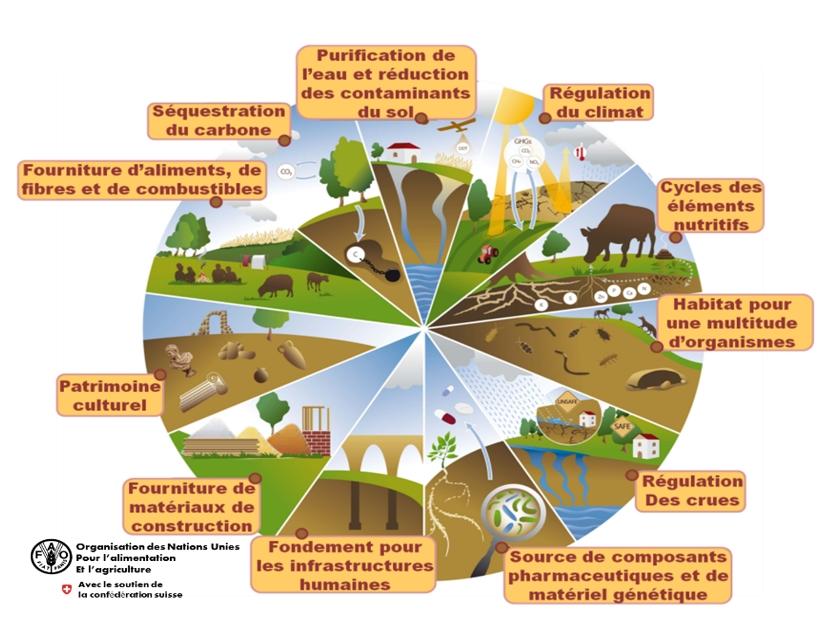 Les principales fonctions attendues pour les sols (source : ONU)