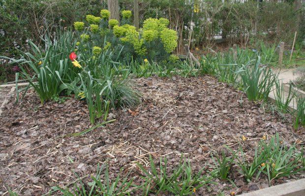 Le compost est couramment utilisé pour un apport de matière organique, comme ici dans un jardin partagé à Paris - © J.-F. Coffin