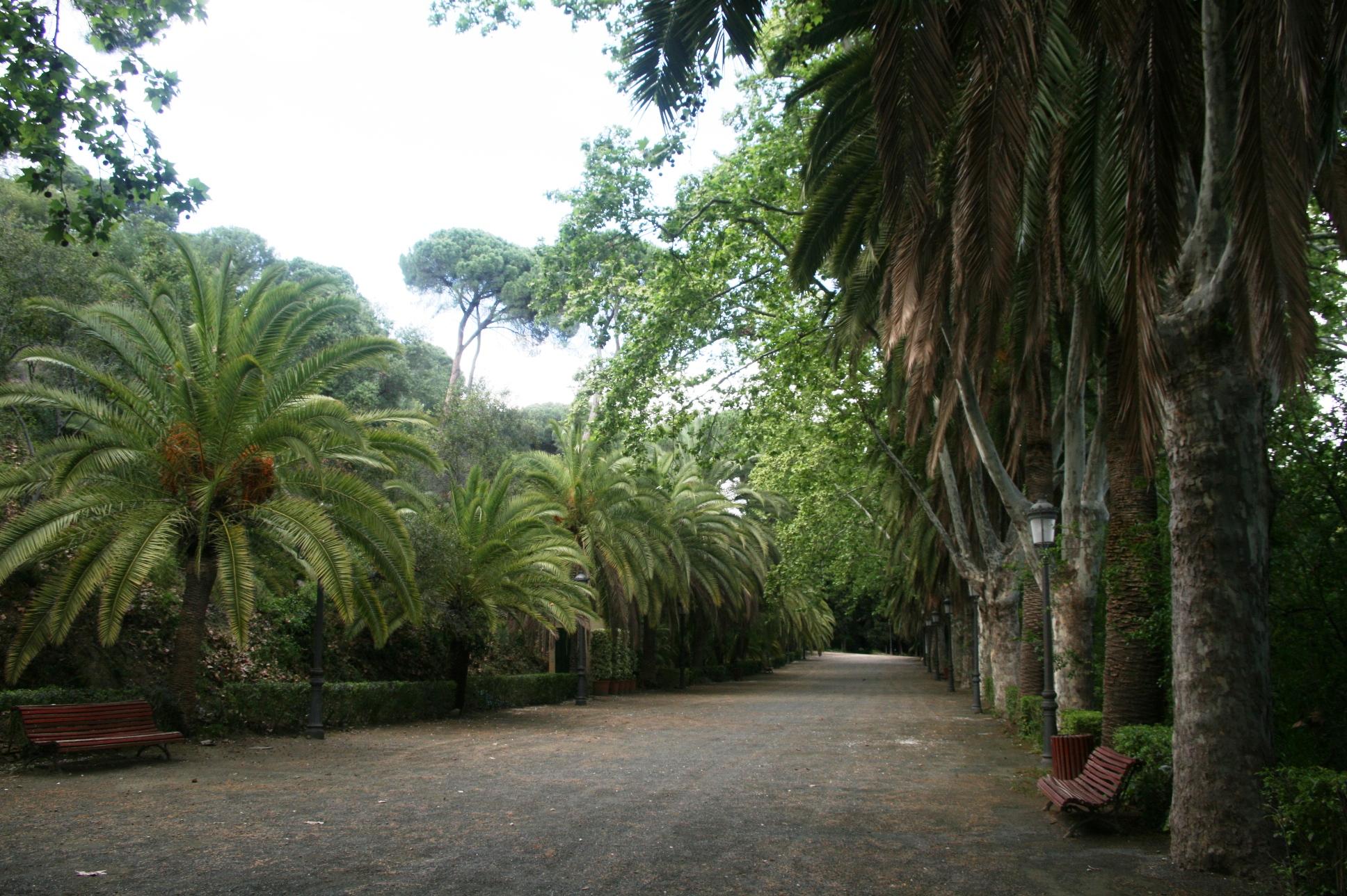 La collection de palmiers est considérée comme l'une des plus variées d'Europe, composée d'environ 100 espèces - © J.-F. Coffin