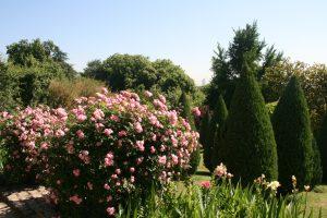 La rose est l'un des végétaux les plus utilisés dans le domaine de l'ornement, avec une demande de plus en plus forte sur le parfum