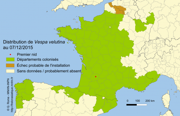 Distribution de Vespa velutina en Europe fin 2015