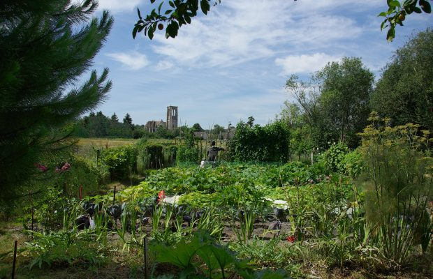 jardin potager sans pesticide