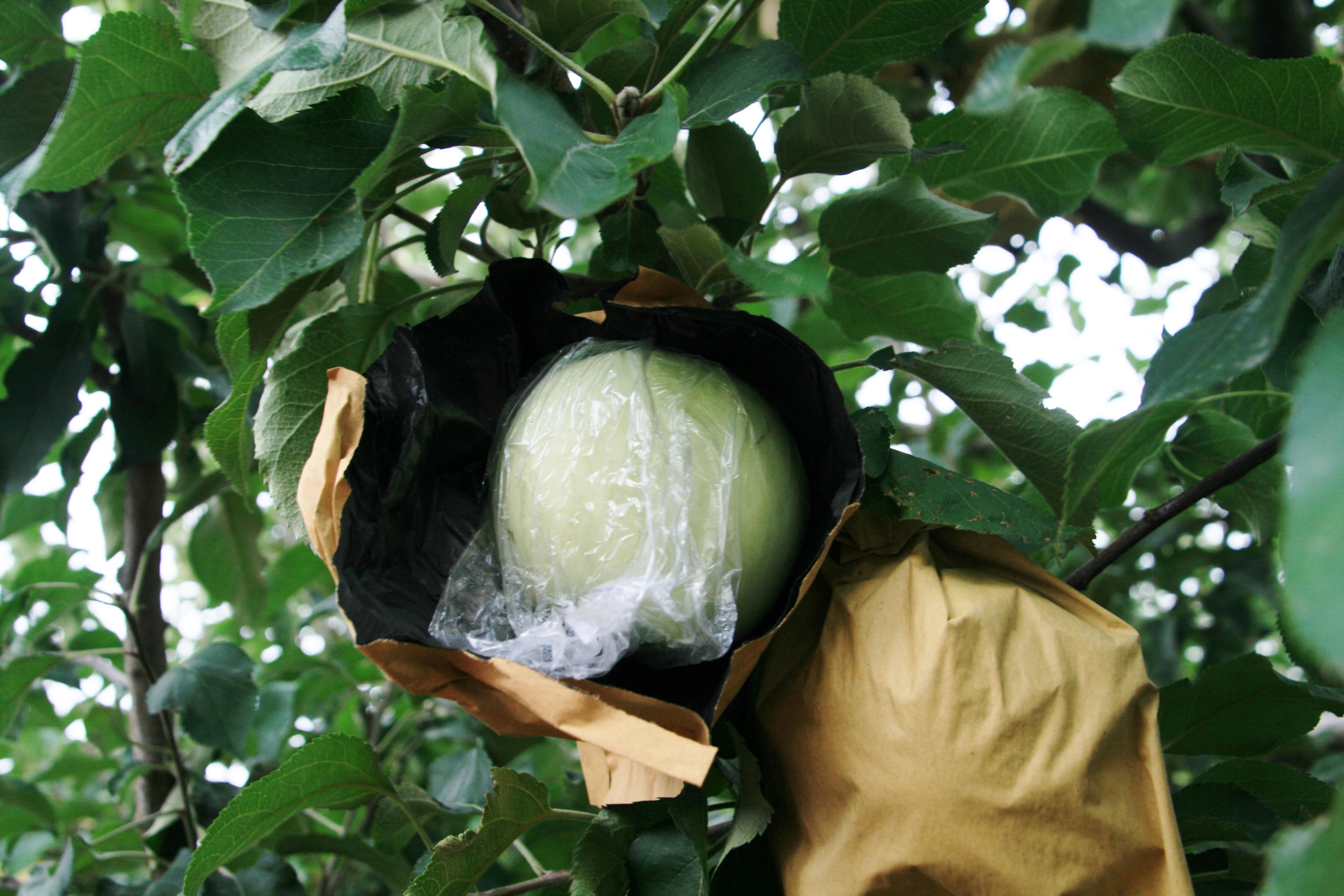 filets anti insectes pour protéger potager et verger - jardins de france
