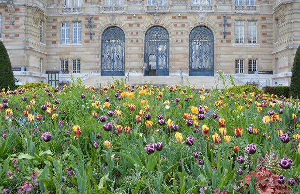 Fleurissement printanier incluant des vivaces et des bulbes, Hôtel de ville de Versailles