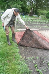tapis paillage efficace