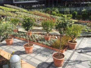 Les plantations du jardin « arable » et l'anamorphose