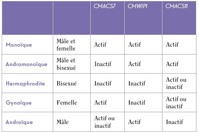 TABLEAU. Contrôle du phénotype sexuel chez le melon par 3 gènes combinés