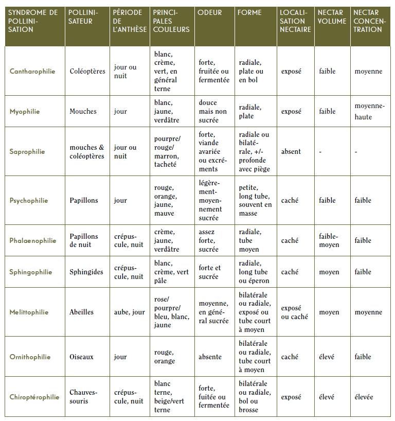 Principaux caractères floraux des différents syndromes de pollinisation