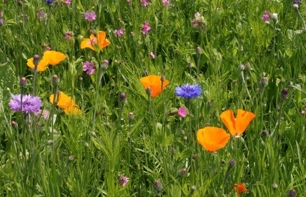 plantes à fleurs pollinisées