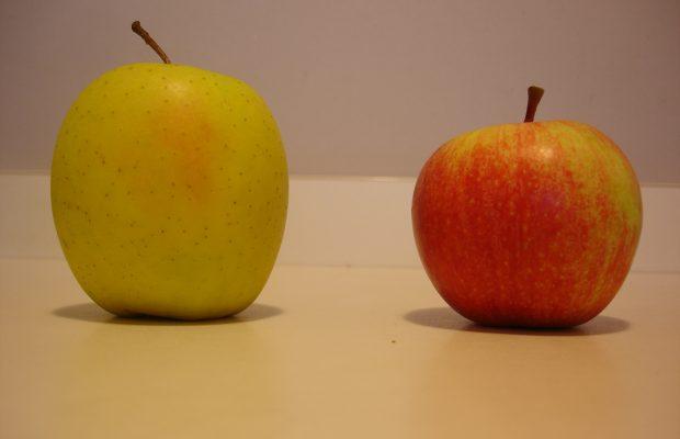La pollinisation des pommes