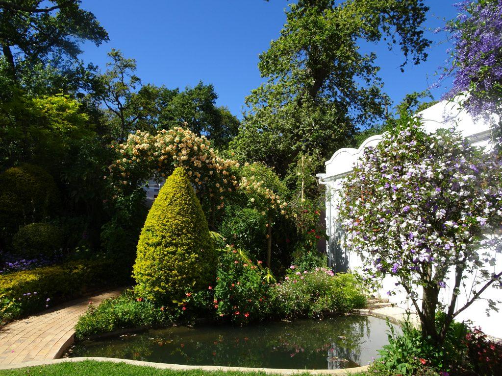 Au premier plan, parmi les végétaux typiques de la région, le fameux « Hier, aujourd'hui, demain », en fait un Brunfelsia originaire des Antilles, dont les fleurs virent en trois jours du violet au blanc, en passant par le bleu… - © J.-F. Coffin
