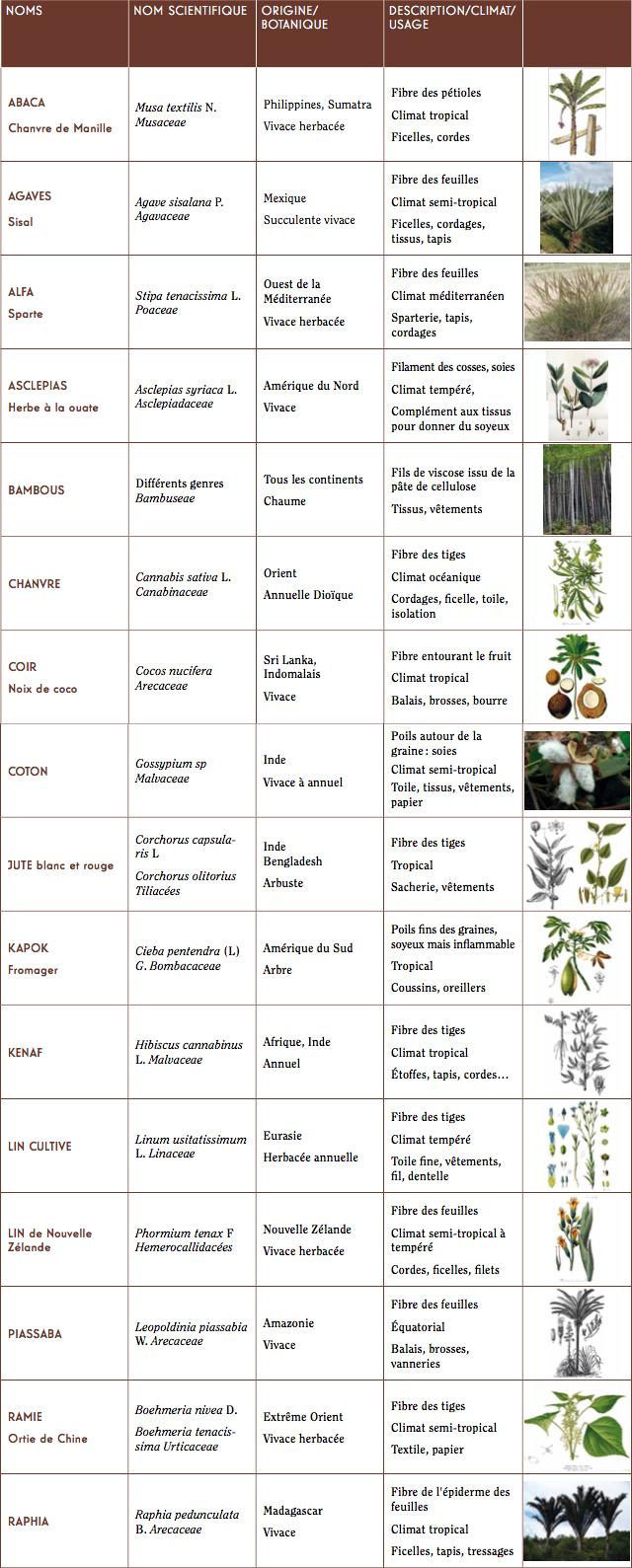 Plantes textiles, une multitude d'espèces