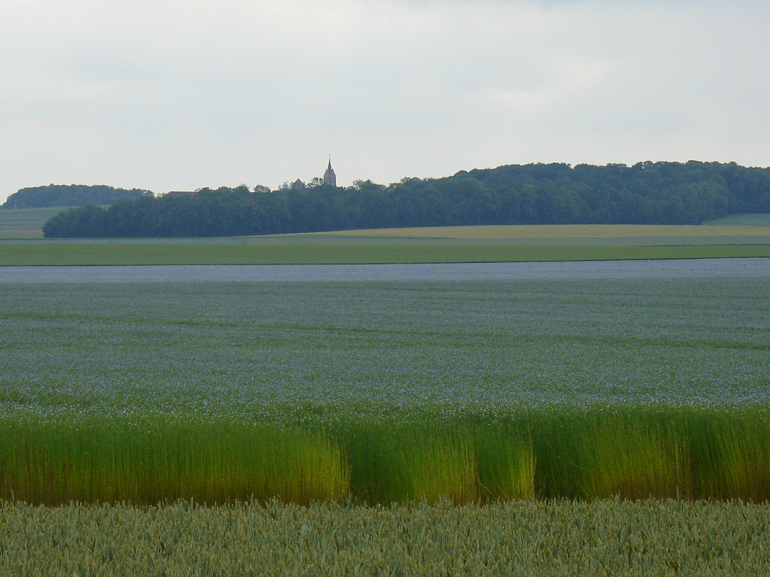 Normandie - Picardie, région de choix pour le lin fibre - Jardins de France