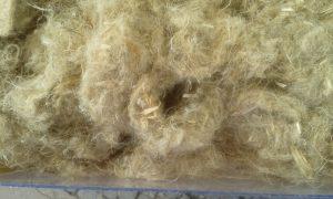ChanvreLa fibre de chanvre est de plus en plus utilisée dans l'isolation, notamment dans le bâtiment © D.R.
