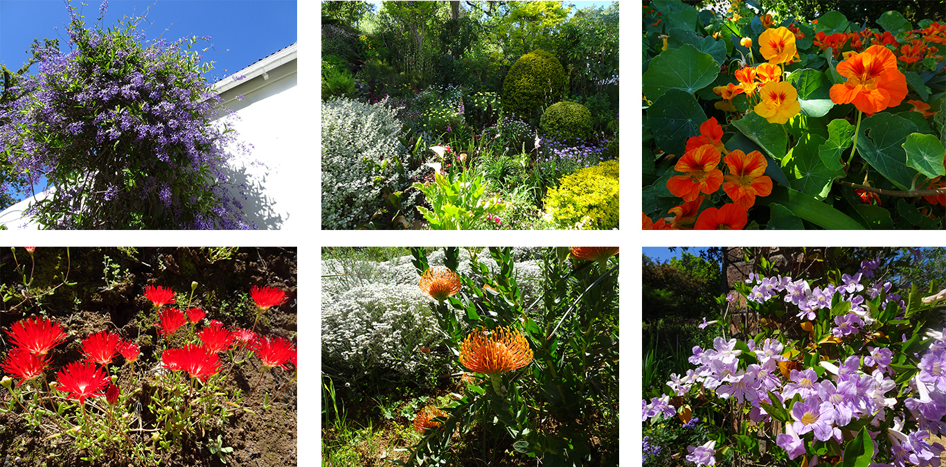 Des espèces locales comme le Lamprathus ficoïde (rouge à gauche) et les Protea s'harmonisent avec des plantes courantes ou rares issues de tous les continents - © J.-F. Coffin