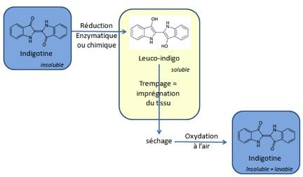 Figure 3 - couleur et solubilité de l'indigotine selon son état d'oxydation