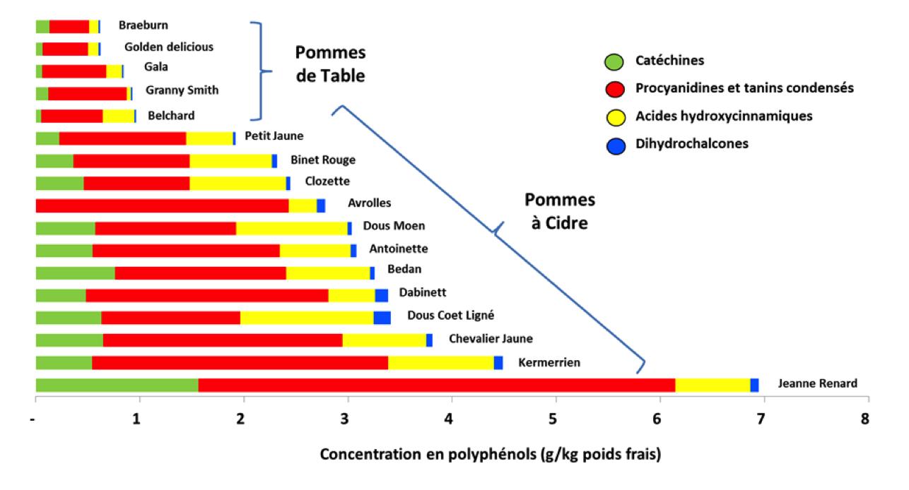 Figure 3 – Distribution des composés phénoliques dans les fruits d'une série de variétés de pommes à cidre et de pommes de table (extrait de Sanoner et al., 1999 et Guyot et al., 2002)
