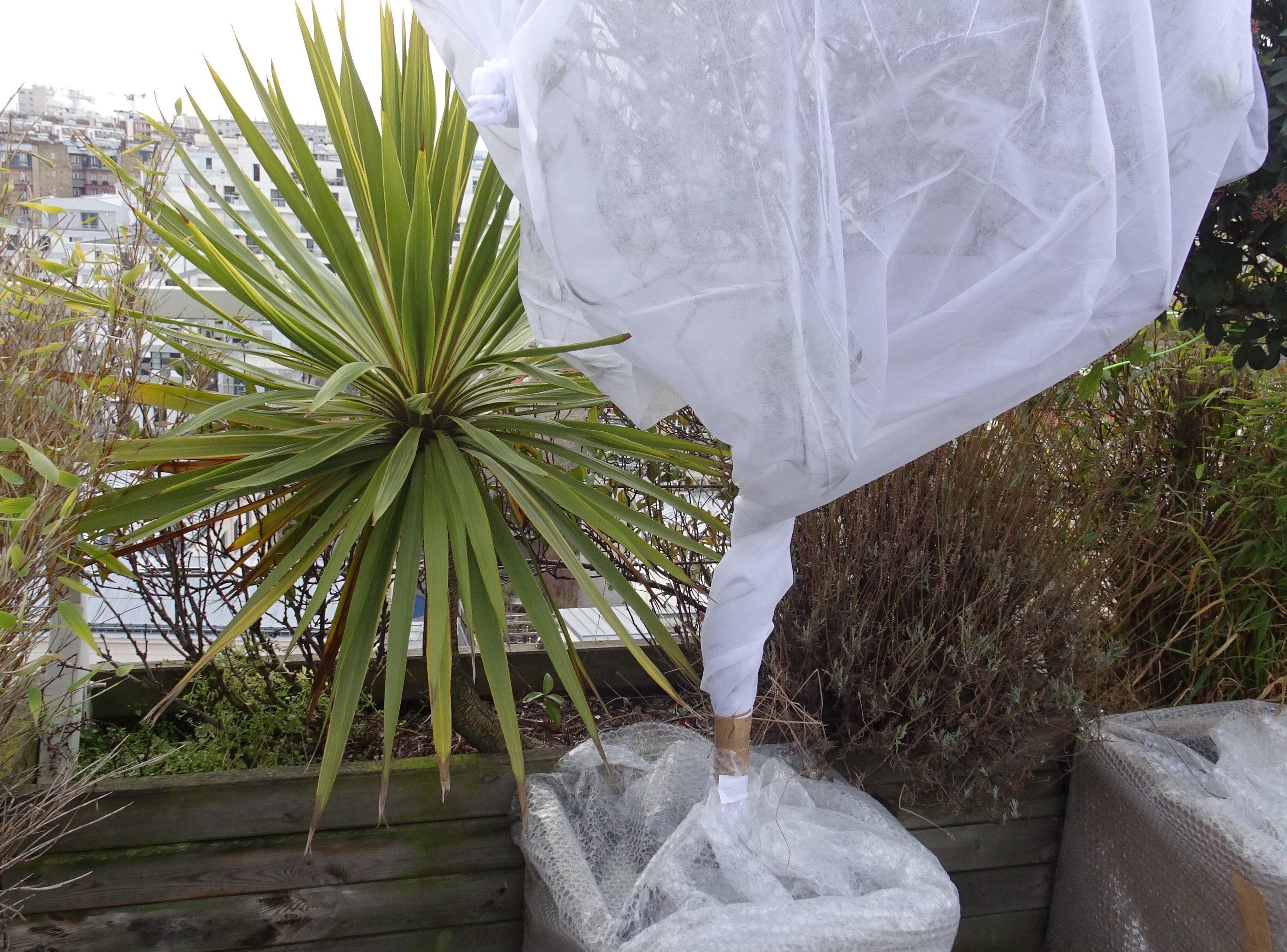 gel au balcon plantes en danger jardins de france. Black Bedroom Furniture Sets. Home Design Ideas